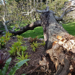stump grinding brisbane southside
